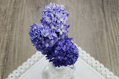 Hyacinth flowers Stock Photos