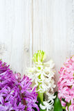 Hyacinth flowers on wooden surface Stock Photography