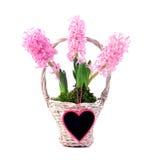 Hyacinth and heart Stock Photos
