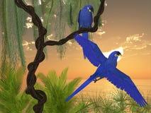 Hyacinth Macaws Royalty Free Stock Image