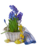 Hyacinth, muscari  with an easters rabbit and egg in a white bas Stock Image