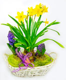 Hyacinth and narcissus decoration Royalty Free Stock Photo