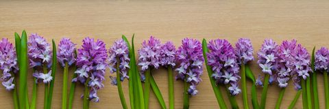 Hyacinth panorama Royalty Free Stock Images
