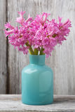 Hyacinth. Stock Photos