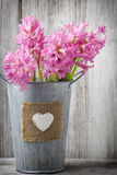 Hyacinth. Stock Photography