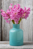 Hyacinth. Stock Images