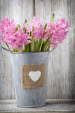 Hyacinth. Royalty Free Stock Image