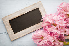 Hyacinth. Royalty Free Stock Photo