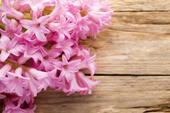 Hyacinth. Stock Image