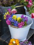 hyacinth plant surrounded by different flowers Royalty Free Stock Images