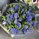 Hyacinth plant surrounded by different flowers in flower store. Stock Images