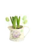 Hyacinth in a pot with Easter eggs Royalty Free Stock Image