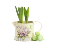 Hyacinth in a pot with Easter eggs Royalty Free Stock Photography
