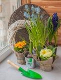 Hyacinth and primrose Stock Photos