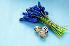 Hyacinth with quail eggs on a blue plywood Royalty Free Stock Photography