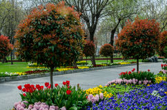 Landscape. Hyacinth red green plant flowers spring landscape tulips trees landscape Royalty Free Stock Photography