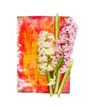 Hyacinth on red yellow wooden background,  Stock Photography