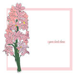 Hyacinth simple card Stock Photos