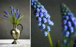Hyacinth Still Life Stockfotos