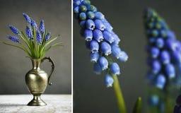 Hyacinth Still Life Stockfotos