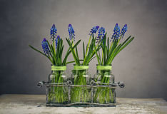 Hyacinth Still Life Lizenzfreie Stockfotos