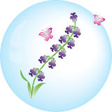 Hyacinth vector flower Stock Photos
