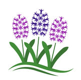 Hyacinths Royalty Free Stock Images
