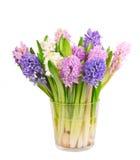 hyacinths Foto de Stock