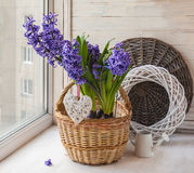 Hyacinths in a basket  on the background braided circle Stock Images