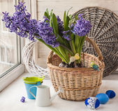 Hyacinths in a basket in the window Stock Photography
