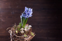Hyacinths bouquet. Hyacinths easter nest bouquet decoration Stock Image