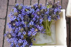 The Hyacinths in a bucket on the flower market in Amsterdam for sale Royalty Free Stock Images