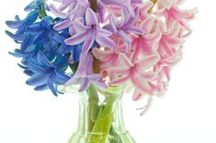 Hyacinths close-up Stock Images