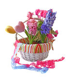 Hyacinths and with a cyclamens in a white basket Stock Image