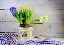 Hyacinths and daffodils in ceramic pots. On wooden background royalty free stock photography