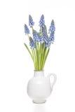Hyacinths de uva pequenos Fotografia de Stock Royalty Free