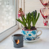 Hyacinths in a decorative pot with a vintage pattern Royalty Free Stock Images