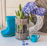 Hyacinths  and decorative watering can  on the window Royalty Free Stock Photo