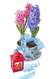 Hyacinths  and flashlight on a white background Stock Photography
