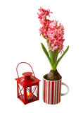 Hyacinths and flashlight on a white background Stock Photos