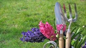 Hyacinths and gardening tools Royalty Free Stock Image