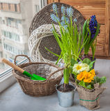 Hyacinths and primroses near the basket and a shovel on the wind Stock Photo