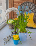 Hyacinths and primroses  on the window Royalty Free Stock Image
