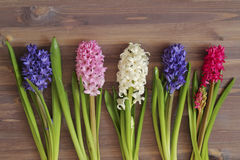 Hyacinths Royalty Free Stock Photos