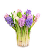 Hyacinths. Spring multicolored hyacinths in glass on white background, clipping path Stock Photo