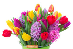 Hyacinths and tulips Stock Images