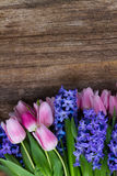 Hyacinths and tulips Stock Photos
