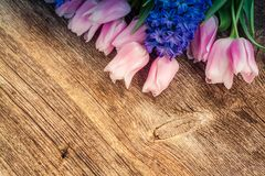 Hyacinths and tulips stock photography