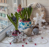 Hyacinths in vintage pots and  Christmas decorations. Stock Images