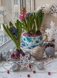 Hyacinths in vintage pots and  Christmas decorations. Royalty Free Stock Image
